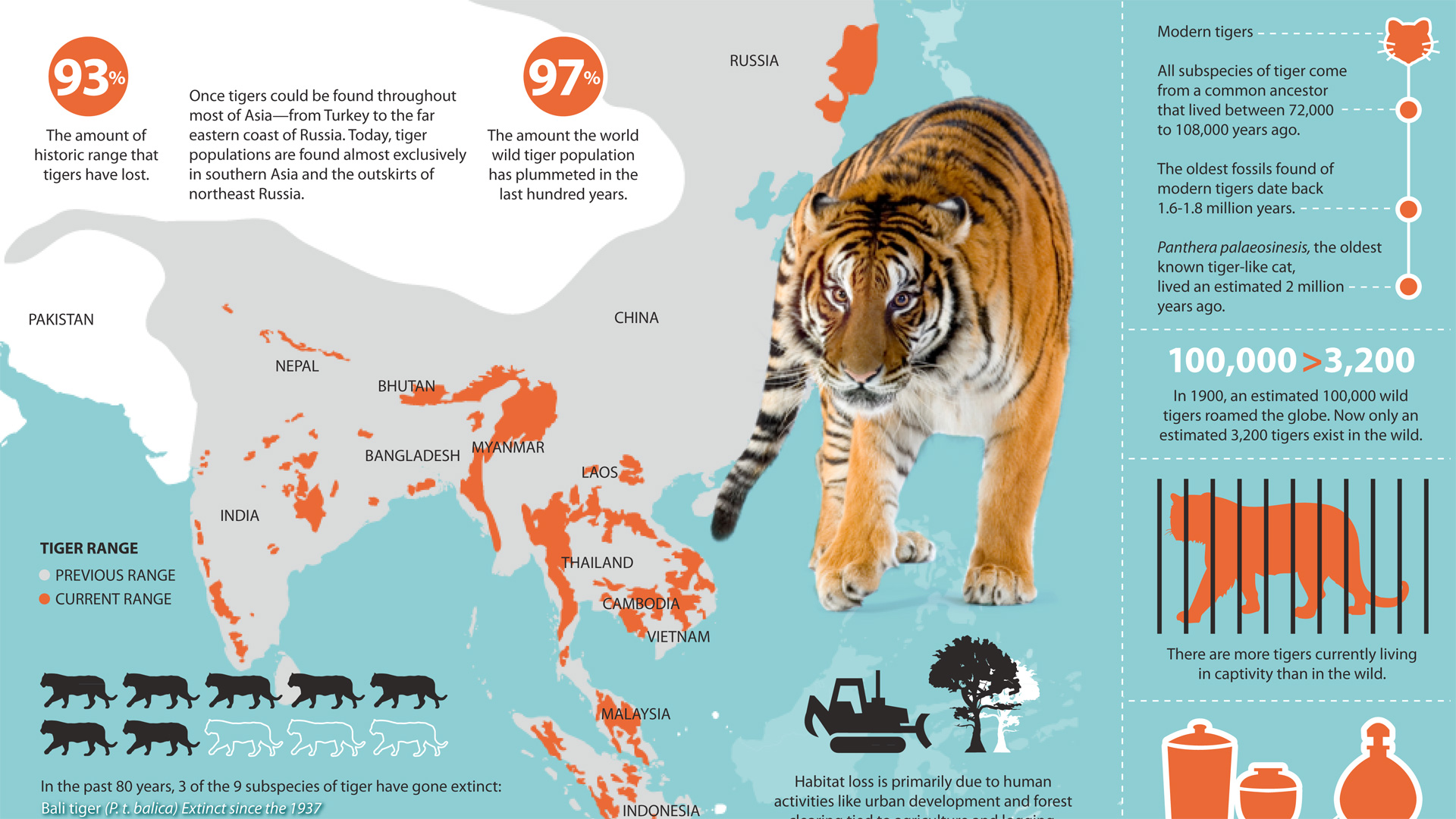 where do siberian tigers live